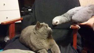 кішка і папуга
